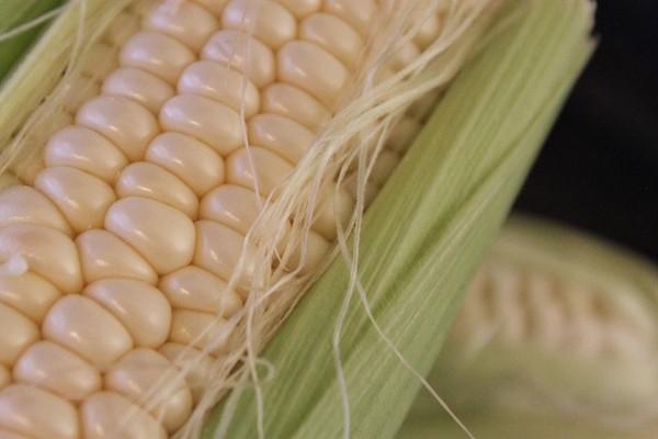 corncob1